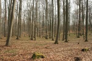 Blick in den RuheForst Werraland bei Herleshausen