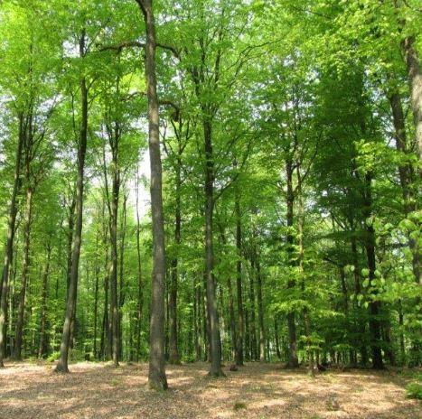 """Wald 5434 in Am 15. September wird in Deutschland der """"Tag des Friedhofs"""" begangen"""