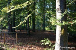 Blick in Wald IMG_2822 verkleinert